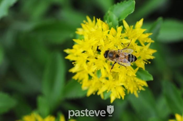 벌과 파리를 구별하는 법