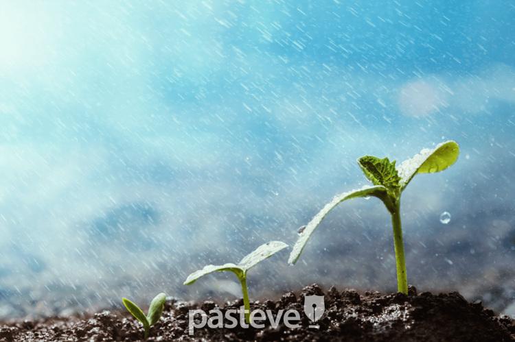 이른비와 늦은비-이스라엘의 우기에 내리는 비