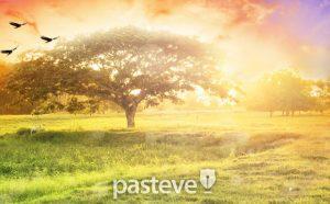 생명나무(tree of life)