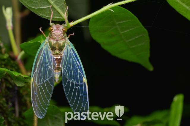 매미 애벌레